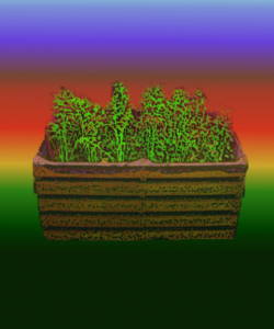 imapagagricultura